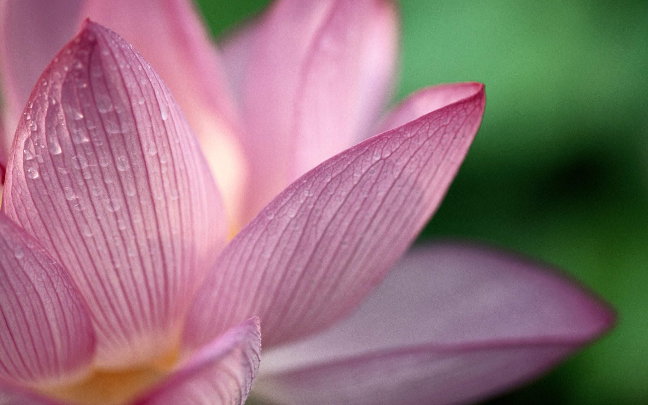 La sagesse bouddhiste bouddhiste - Fleur de lotus bouddhisme ...